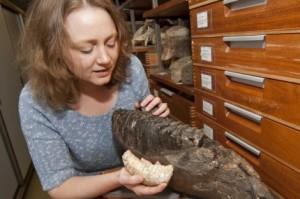 Victoria Herridge del Museo de Historia Natural de Londres con colmillos de dos tipos de mamuts