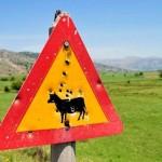 Señales de tráfico de Creta disparadas