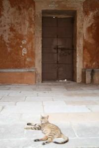 Gato en el monasterio Agia Triada